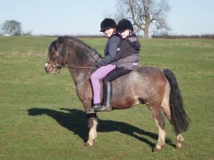 section A stallion ridden
